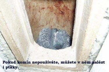 Pokud komín nepoužíváte, můžete v něm nalézt i ptáky  Zdroj: http://vytapeni.tzb-info.cz/kominy-a-kourovody/12947-cistit-komin-je-mozne-i-svepomoci